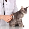 Ветеринарные клиники в Киясово
